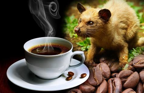 Kopi Luwak: All You Want to Know About the World's Most