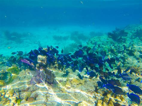 How To Find The Best Snorkeling in the Keys: A Namaste Eco