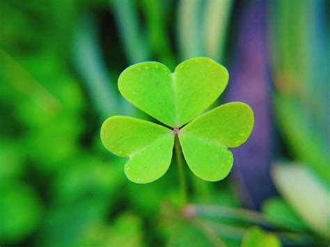 Top 10 facts about St Patrick | Express