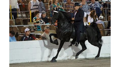 Congress must act to end cruelty to show horses   TheHill