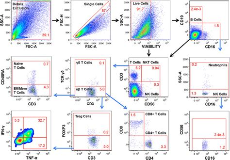 Flow cytometric characterization of B cells, T cells, NK