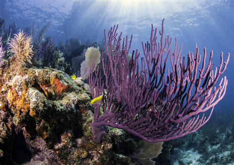 9 Must-Dive Sites in Florida