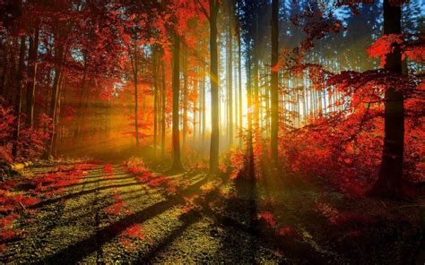 Autumn Red Forest Wallpapers | HD Wallpapers | ID #16390
